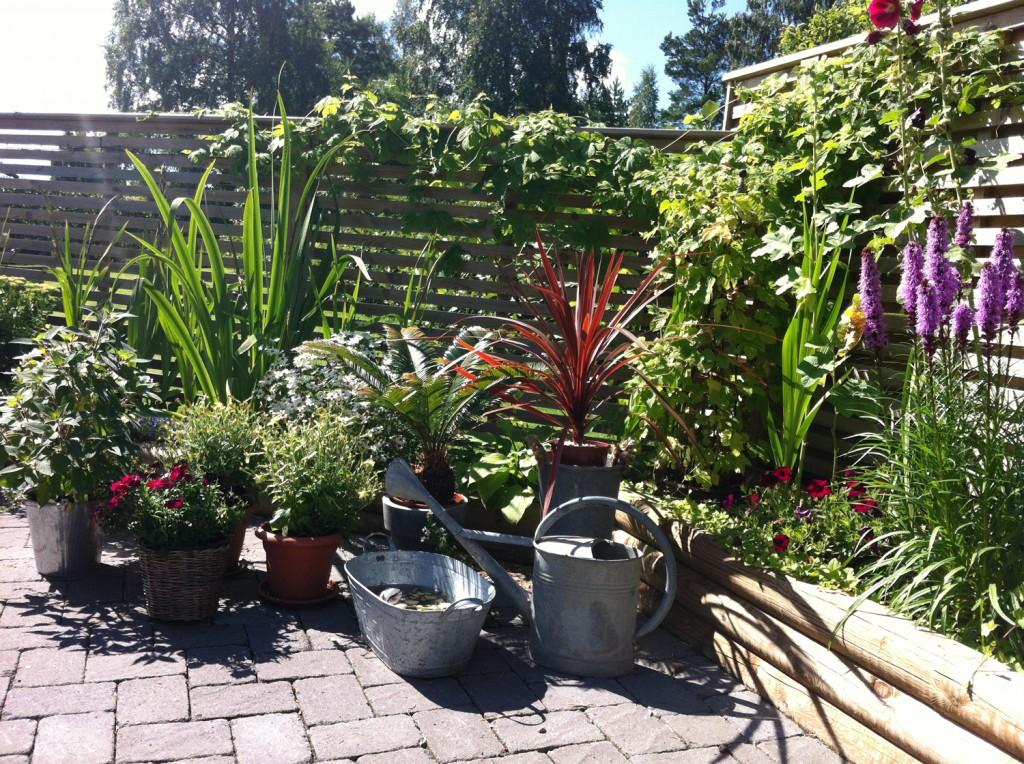 Liljor, gladiolus, blomstertobak och humle